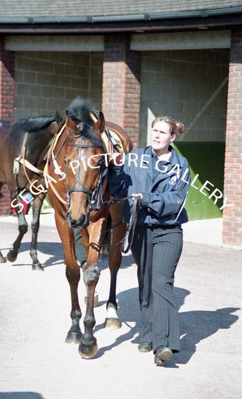 Racehorse Cerium with Jockey Ruby Walsh